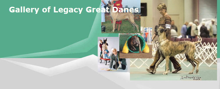 Gallery of Legacy Great Danes